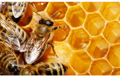 bees honeycomb hexagonal